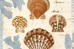 Seashell-Collection-I