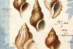 Seashell-Collection-II