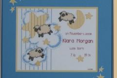 Stars-Sheep
